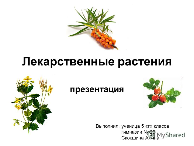 Лекарственные растения класс
