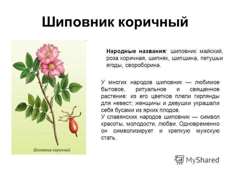 лекарственные травы от холестерина в крови