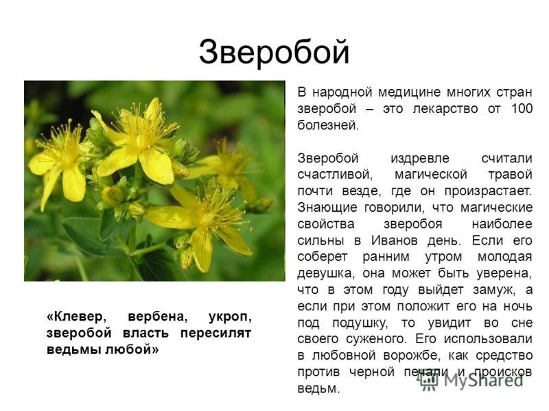 Лекарственные растения зверобой рецепты