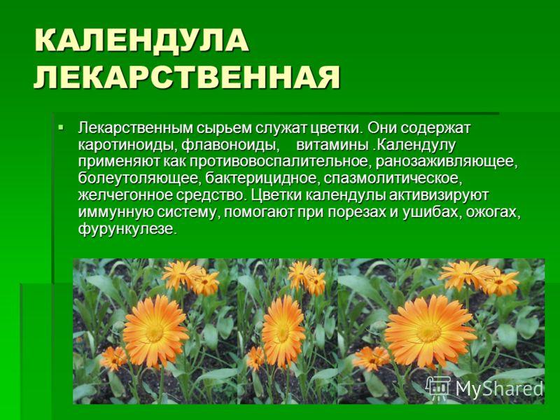 КАЛЕНДУЛА ЛЕКАРСТВЕННАЯ Лекарственным сырьем служат цветки. Они содержат каротиноиды, флавоноиды, витамины.Календулу применяют как противовоспалительное, ранозаживляющее, болеутоляющее, бактерицидное, спазмолитическое, желчегонное средство. Цветки ка
