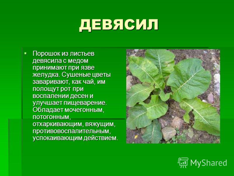 ДЕВЯСИЛ Порошок из листьев девясила с медом принимают при язве желудка. Сушеные цветы заваривают, как чай, им полощут рот при воспалении десен и улучшает пищеварение. Обладает мочегонным, потогонным, отхаркивающим, вяжущим, противовоспалительным, усп