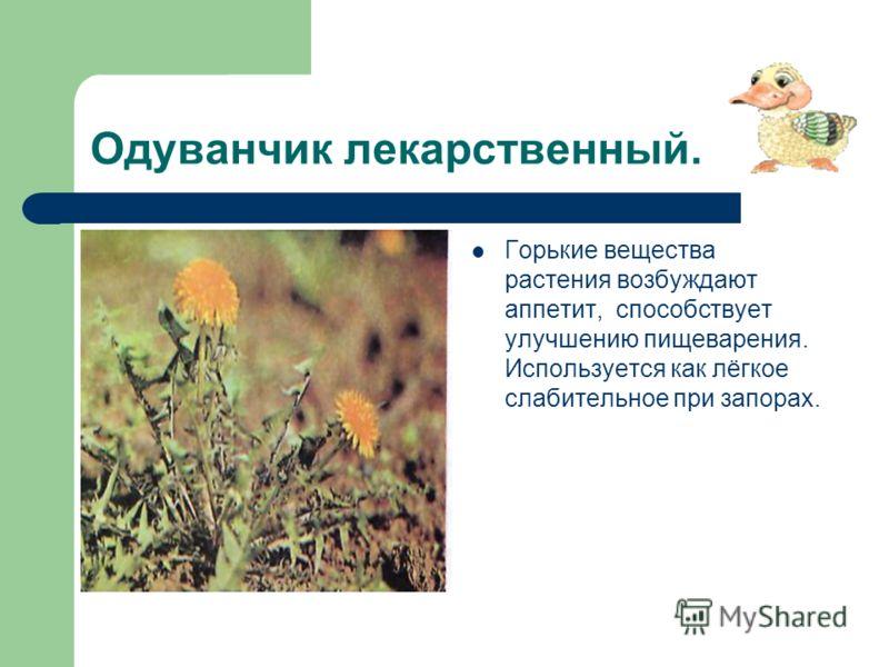 Одуванчик лекарственный. Горькие вещества растения возбуждают аппетит, способствует улучшению пищеварения. Используется как лёгкое слабительное при запорах.
