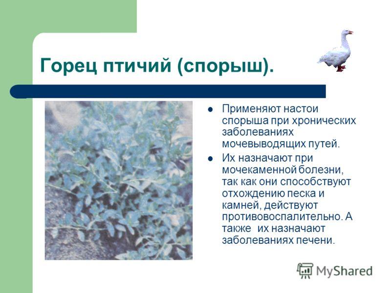 Горец птичий (спорыш). Применяют настои спорыша при хронических заболеваниях мочевыводящих путей. Их назначают при мочекаменной болезни, так как они способствуют отхождению песка и камней, действуют противовоспалительно. А также их назначают заболева