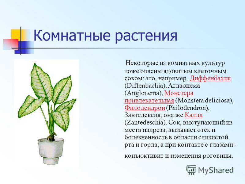 Комнатные растения Некоторые из комнатных культур тоже опасны ядовитым клеточным соком; это, например, Диффенбахия (Diffenbachia), Аглаонема (Anglonema), Монстера привлекательная (Monstera deliciosa), Филодендрон (Philodendron), Зантедексия, она же К