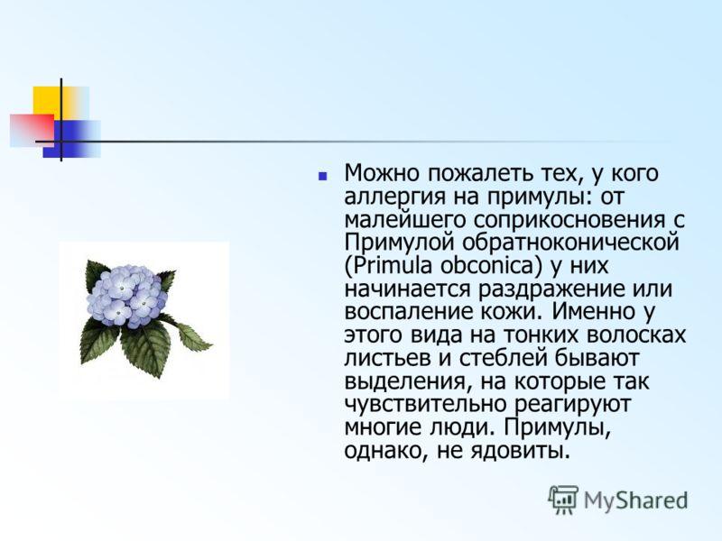 Можно пожалеть тех, у кого аллергия на примулы: от малейшего соприкосновения с Примулой обратноконической (Primula obconica) у них начинается раздражение или воспаление кожи. Именно у этого вида на тонких волосках листьев и стеблей бывают выделения,