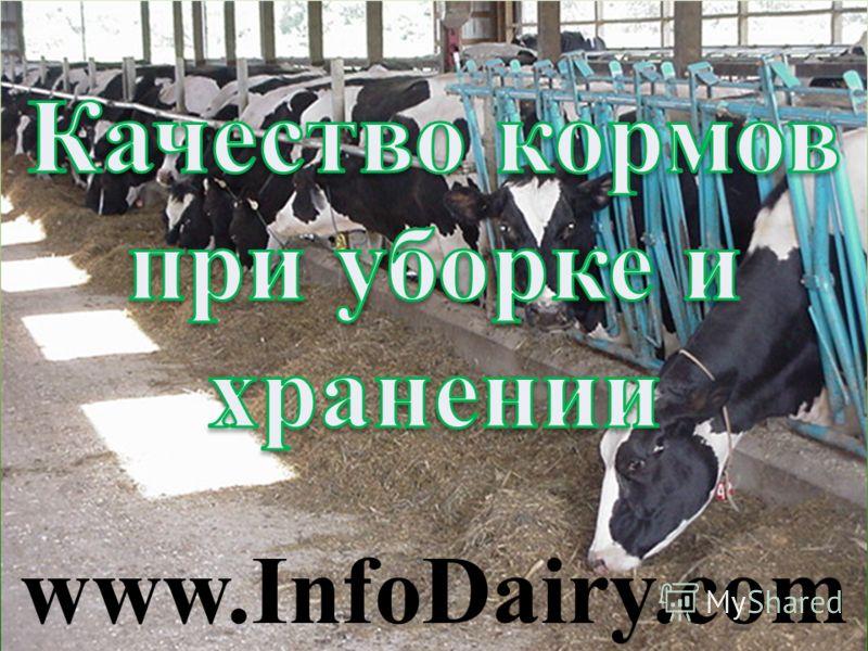 www.InfoDairy.com