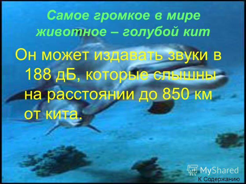 Самое громкое в мире животное – голубой кит Он может издавать звуки в 188 дБ, которые слышны на расстоянии до 850 км от кита. К Содержанию