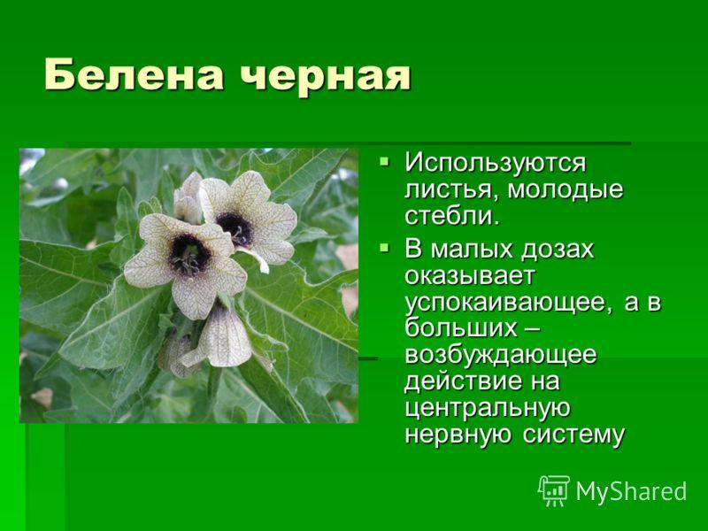 Валериана Это многолетнее травянистое растение пользуется широчайшей известностью в медицине с древнейших времен. Используют подземные органы - корневище с отходящими от него пучками мясистых корней. Используют подземные органы - корневище с отходящи