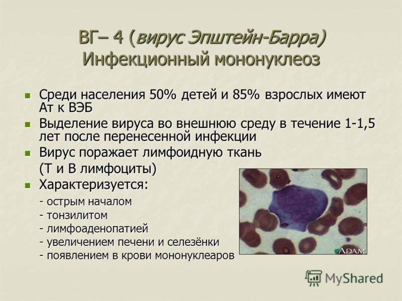ВГ– 4 (вирус Эпштейн-Барра) Инфекционный мононуклеоз Среди населения 50% детей и 85% взрослых имеют Ат к ВЭБ Среди населения 50% детей и 85% взрослых имеют Ат к ВЭБ Выделение вируса во внешнюю среду в течение 1-1,5 лет после перенесенной инфекции Выд