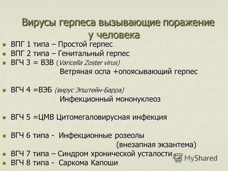 Вирусы герпеса вызывающие поражение у человека Вирусы герпеса вызывающие поражение у человека ВПГ 1 типа – Простой герпес ВПГ 1 типа – Простой герпес ВПГ 2 типа – Генитальный герпес ВПГ 2 типа – Генитальный герпес ВГЧ 3 = ВЗВ (Varicella Zoster virus)