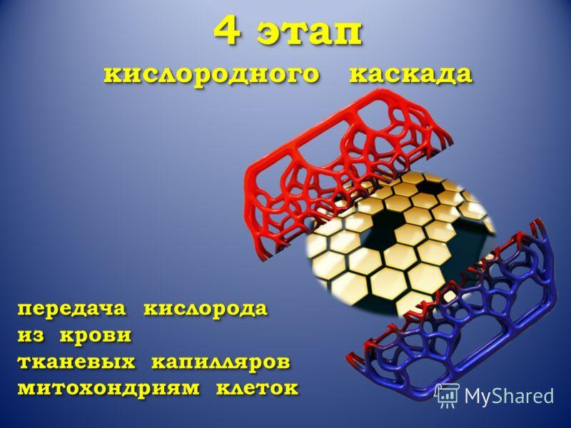 4 этап кислородного каскада 4 этап кислородного каскада передача кислорода из крови тканевых капилляров митохондриям клеток передача кислорода из крови тканевых капилляров митохондриям клеток