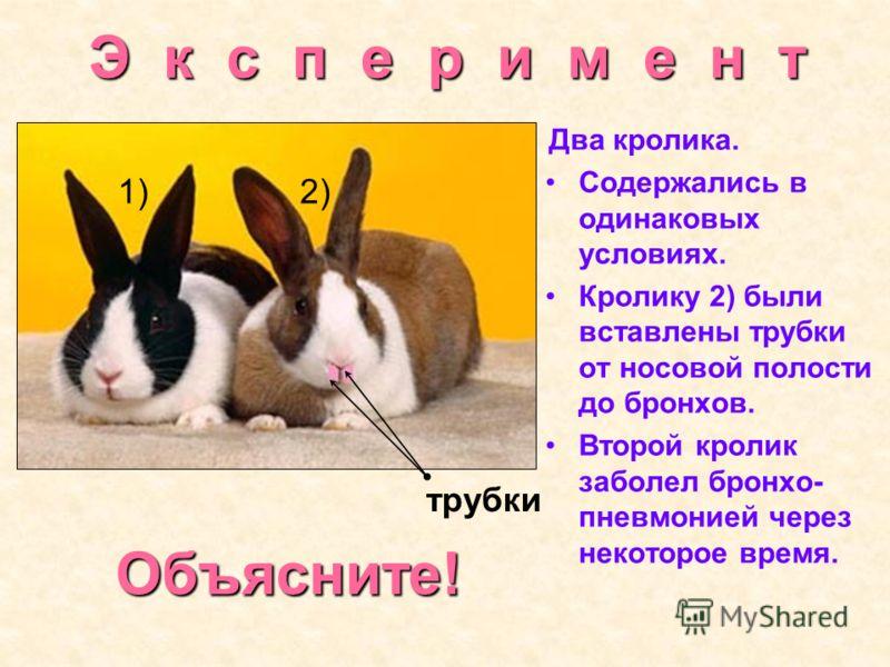 Э к с п е р и м е н т Два кролика. Содержались в одинаковых условиях. Кролику 2) были вставлены трубки от носовой полости до бронхов. Второй кролик заболел бронхо- пневмонией через некоторое время. трубки 1)2) Объясните!