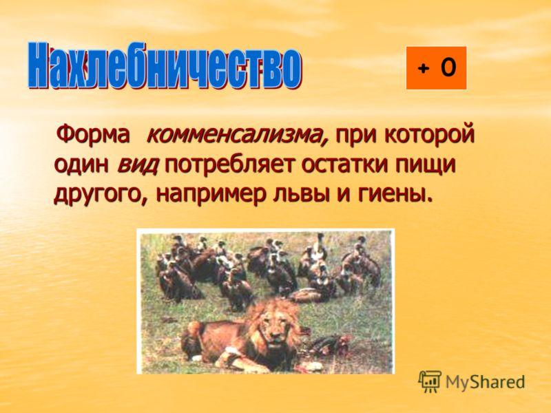 Нахлебничество Форма комменсализма, при которой один вид потребляет остатки пищи другого, например львы и гиены. Форма комменсализма, при которой один вид потребляет остатки пищи другого, например львы и гиены. + 0