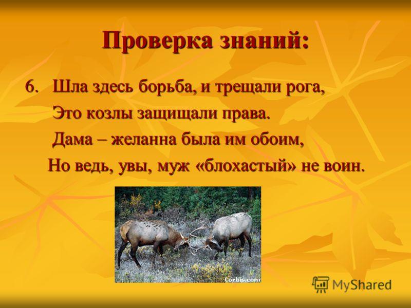 Проверка знаний: 6. Шла здесь борьба, и трещали рога, Это козлы защищали права. Это козлы защищали права. Дама – желанна была им обоим, Дама – желанна была им обоим, Но ведь, увы, муж «блохастый» не воин. Но ведь, увы, муж «блохастый» не воин.
