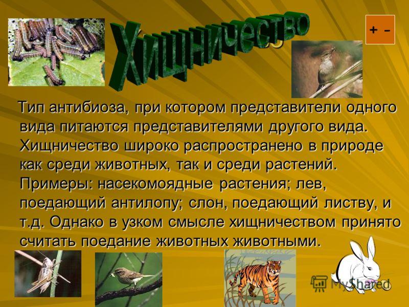 Хищничество Тип антибиоза, при котором представители одного вида питаются представителями другого вида. Хищничество широко распространено в природе как среди животных, так и среди растений. Примеры: насекомоядные растения; лев, поедающий антилопу; сл