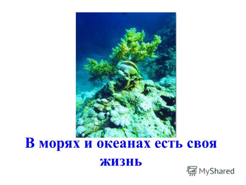 Кто под водой живёт