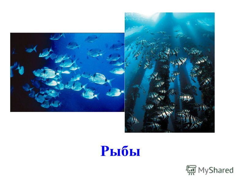 В морях и океанах есть своя жизнь