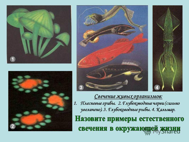1 3 Свечение живых организмов: 1.Плесневые грибы. 2. Глубоководные черви (сильно увеличено). 3. Глубоководные рыбы. 4. Кальмар. 4 2