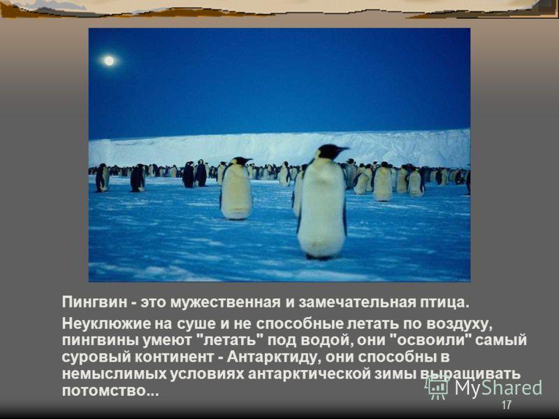 17 Пингвин - это мужественная и замечательная птица. Неуклюжие на суше и не способные летать по воздуху, пингвины умеют