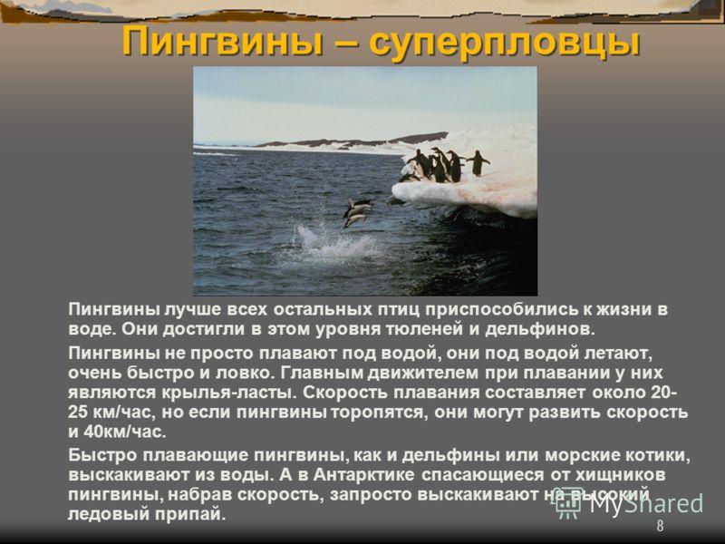 8 Пингвины – суперпловцы Пингвины лучше всех остальных птиц приспособились к жизни в воде. Они достигли в этом уровня тюленей и дельфинов. Пингвины не просто плавают под водой, они под водой летают, очень быстро и ловко. Главным движителем при плаван