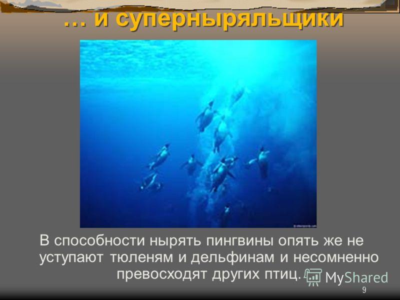 9 … и суперныряльщики В способности нырять пингвины опять же не уступают тюленям и дельфинам и несомненно превосходят других птиц.
