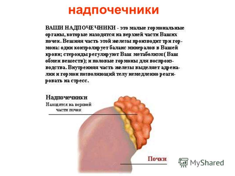 паращитовидная железа Паращитовидная железа.