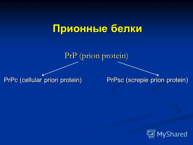 Прионные белки PrP (prion protein) PrPс (cellular prion protein) PrPsc (screpie prion protein) PrPс (cellular prion protein) PrPsc (screpie prion protein)
