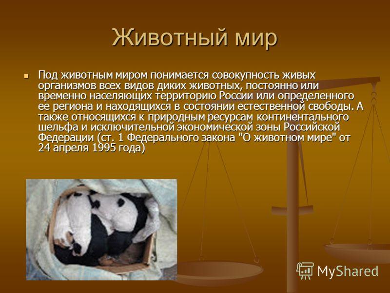 Животный мир Под животным миром понимается совокупность живых организмов всех видов диких животных, постоянно или временно населяющих территорию России или определенного ее региона и находящихся в состоянии естественной свободы. А также относящихся к