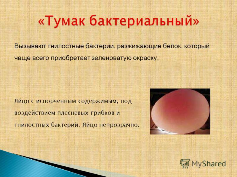 Вызывают гнилостные бактерии, разжижающие белок, который чаще всего приобретает зеленоватую окраску. Яйцо с испорченным содержимым, под воздействием плесневых грибков и гнилостных бактерий. Яйцо непрозрачно.