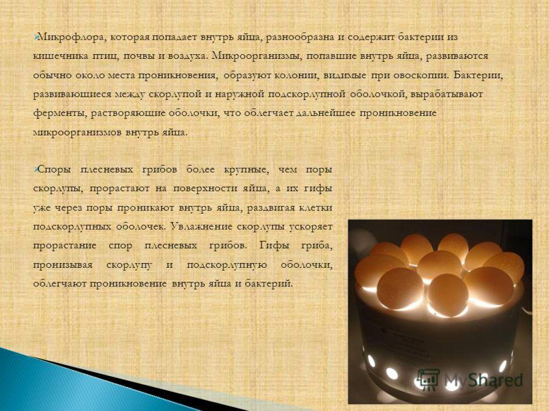 Споры плесневых грибов более крупные, чем поры скорлупы, прорастают на поверхности яйца, а их гифы уже через поры проникают внутрь яйца, раздвигая клетки подскорлупных оболочек. Увлажнение скорлупы ускоряет прорастание спор плесневых грибов. Гифы гри