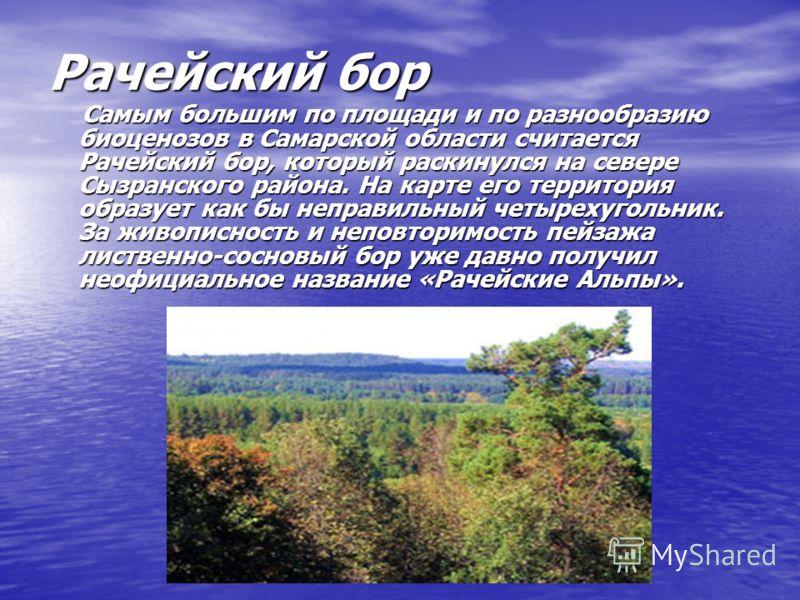 Рачейский бор Самым большим по площади и по разнообразию биоценозов в Самарской области считается Рачейский бор, который раскинулся на севере Сызранского района. На карте его территория образует как бы неправильный четырехугольник. За живописность и