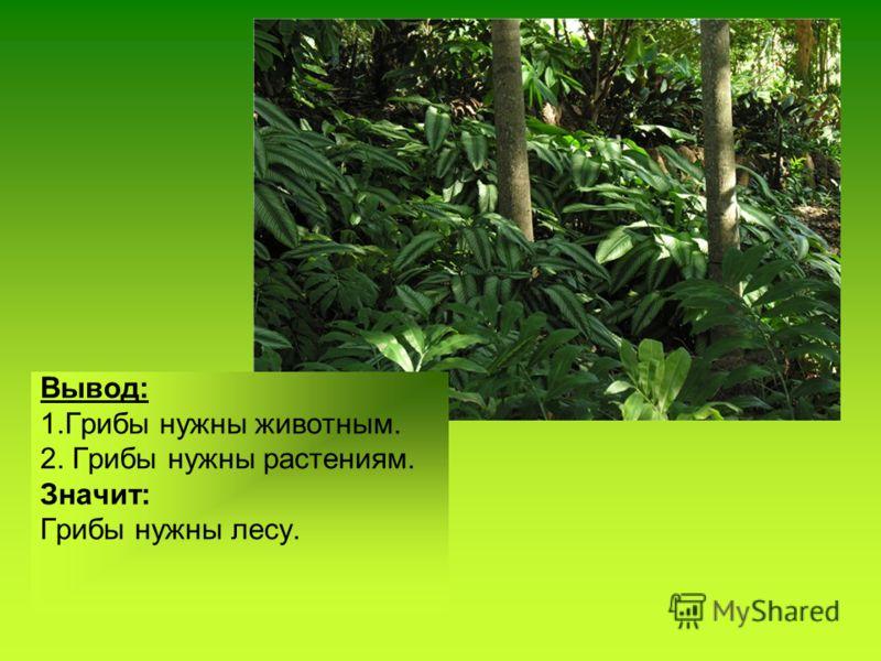 Вывод: 1.Грибы нужны животным. 2. Грибы нужны растениям. Значит: Грибы нужны лесу.