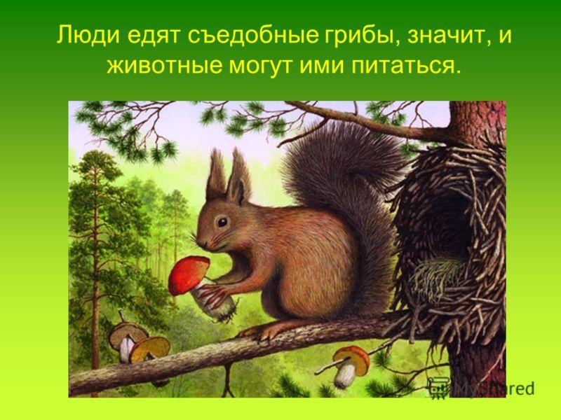 Люди едят съедобные грибы, значит, и животные могут ими питаться.