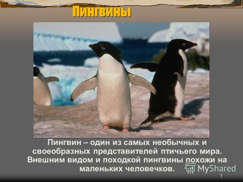 1 Пингвин – один из самых необычных и своеобразных представителей птичьего мира. Внешним видом и походкой пингвины похожи на маленьких человечков. Пингвины