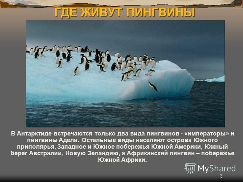 3 ГДЕ ЖИВУТ ПИНГВИНЫ В Антарктиде встречаются только два вида пингвинов - «императоры» и пингвины Адели. Остальные виды населяют острова Южного приполярья, Западное и Южное побережья Южной Америки, Южный берег Австралии, Новую Зеландию, а Африканский