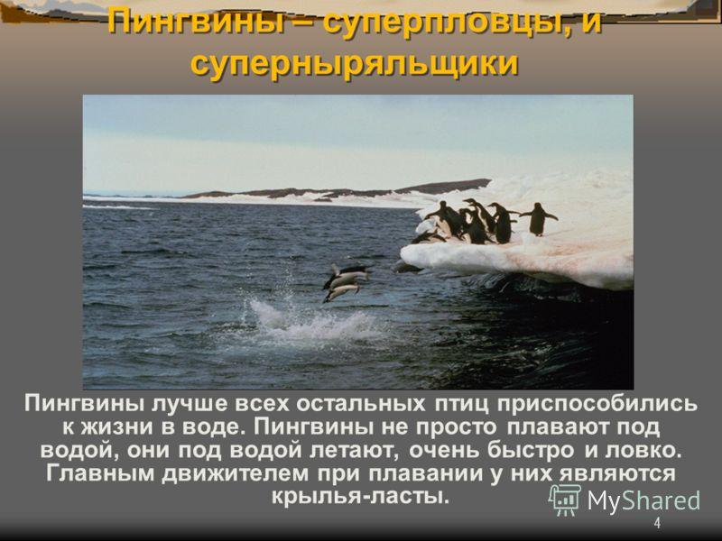 4 Пингвины – суперпловцы, и суперныряльщики Пингвины лучше всех остальных птиц приспособились к жизни в воде. Пингвины не просто плавают под водой, они под водой летают, очень быстро и ловко. Главным движителем при плавании у них являются крылья-ласт