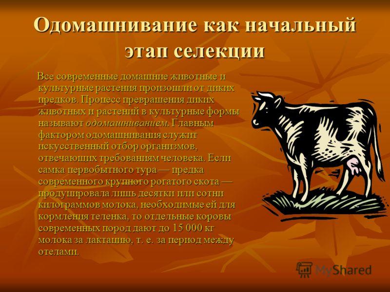 Одомашнивание как начальный этап селекции Все современные домашние животные и культурные растения произошли от диких предков. Процесс превращения <a