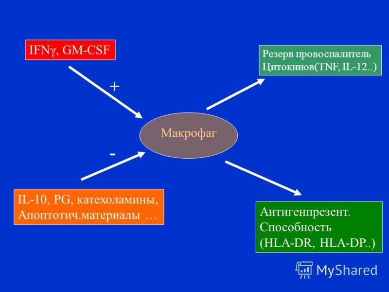 Макрофаг Резерв провоспалитель Цитокинов(TNF, IL-12..) Антигенпрезент. Способность (HLA-DR, HLA-DP..) IFNγ, GM-CSF IL-10, PG, катехоламины, Апоптотич.материалы … + -