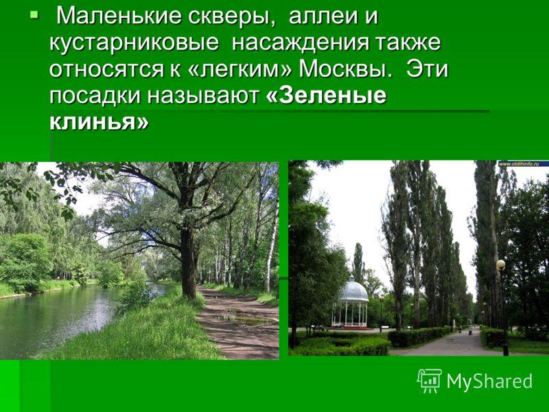 Маленькие скверы, аллеи и кустарниковые насаждения также относятся к «легким» Москвы. Эти посадки называют «Зеленые клинья» Маленькие скверы, аллеи и кустарниковые насаждения также относятся к «легким» Москвы. Эти посадки называют «Зеленые клинья»