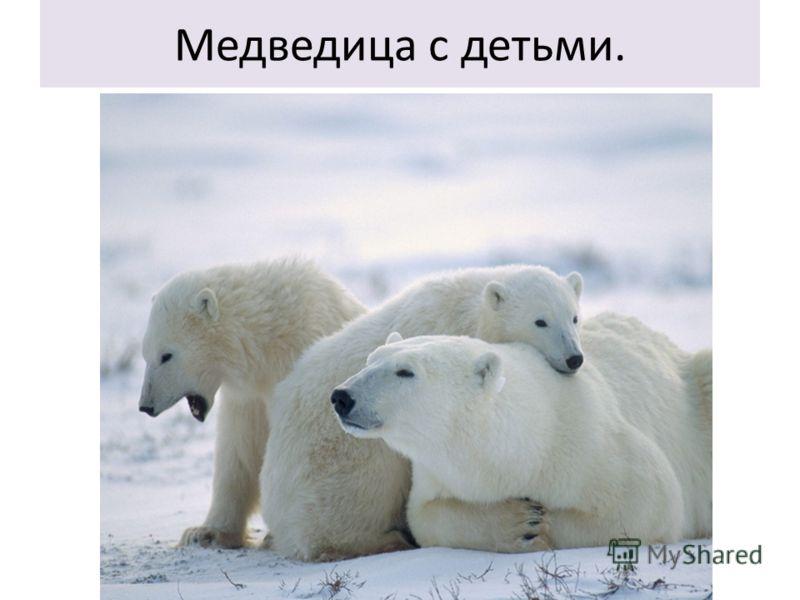 Медведица с детьми.