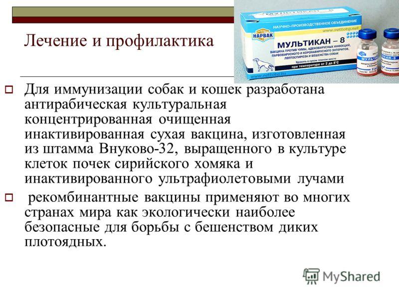 Лечение и профилактика Для иммунизации собак и кошек разработана антирабическая культуральная концентрированная очищенная инактивированная сухая вакцина, изготовленная из штамма Внуково-32, выращенного в культуре клеток почек сирийского хомяка и инак