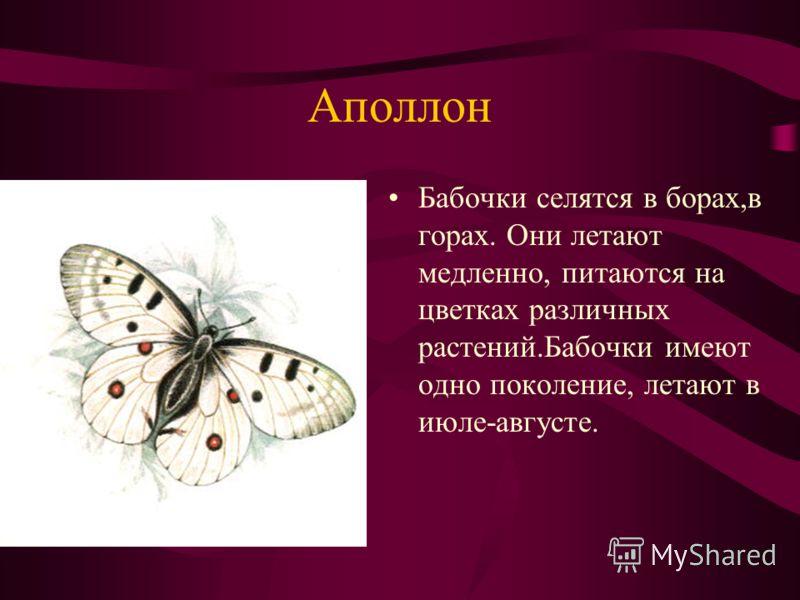 Аполлон Бабочки селятся в борах,в горах. Они летают медленно, питаются на цветках различных растений.Бабочки имеют одно поколение, летают в июле-августе.