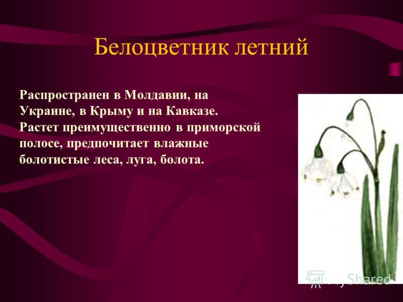 Белоцветник летний Распространен в Молдавии, на Украине, в Крыму и на Кавказе. Растет преимущественно в приморской полосе, предпочитает влажные болотистые леса, луга, болота.
