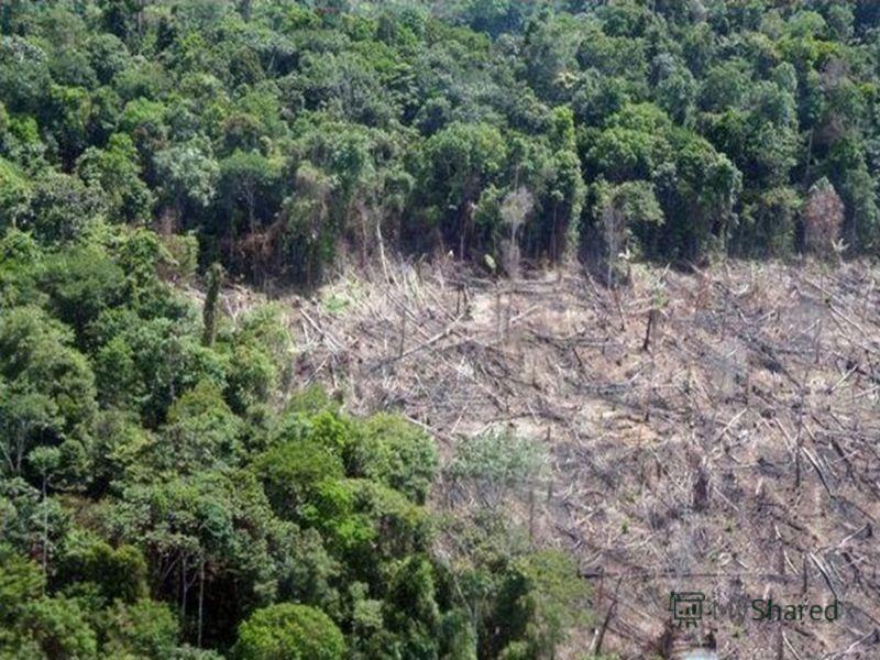Тропические леса:Смешанные леса:
