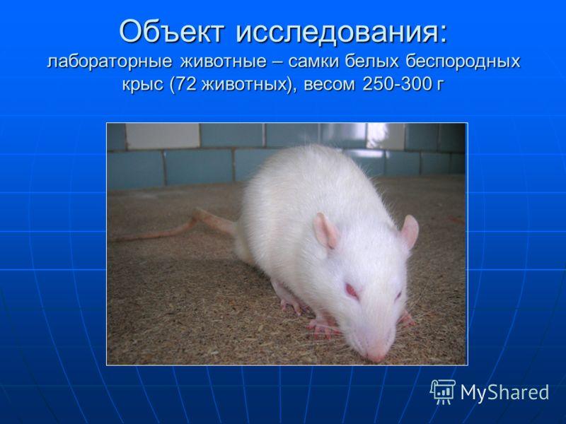 Объект исследования: лабораторные животные – самки белых беспородных крыс (72 животных), весом 250-300 г