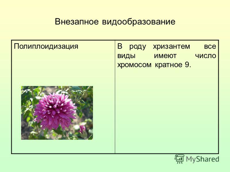 Внезапное видообразование ПолиплоидизацияВ роду хризантем все виды имеют число хромосом кратное 9.