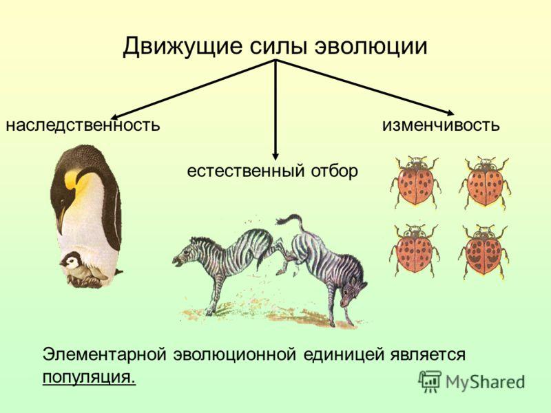 Движущие силы эволюции изменчивостьнаследственность естественный отбор Элементарной эволюционной единицей является популяция.