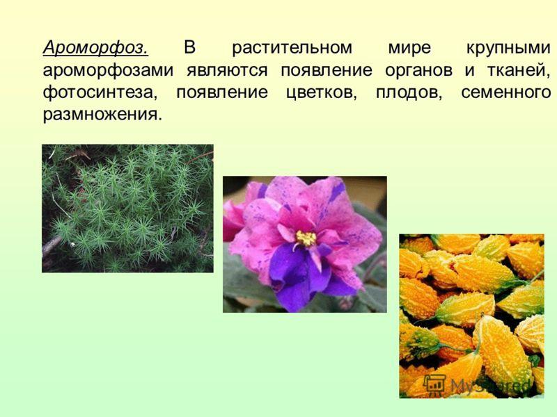Ароморфоз. В растительном мире крупными ароморфозами являются появление органов и тканей, фотосинтеза, появление цветков, плодов, семенного размножения.