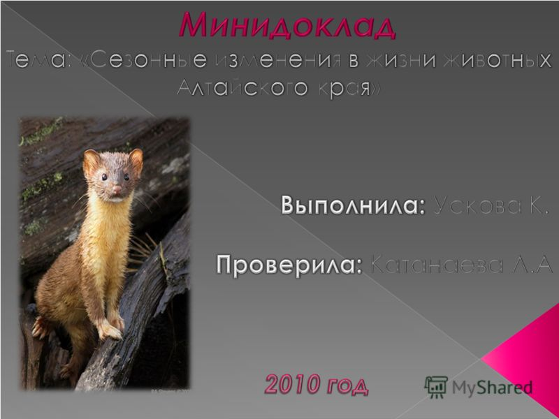 Презентация на тему как животный мир