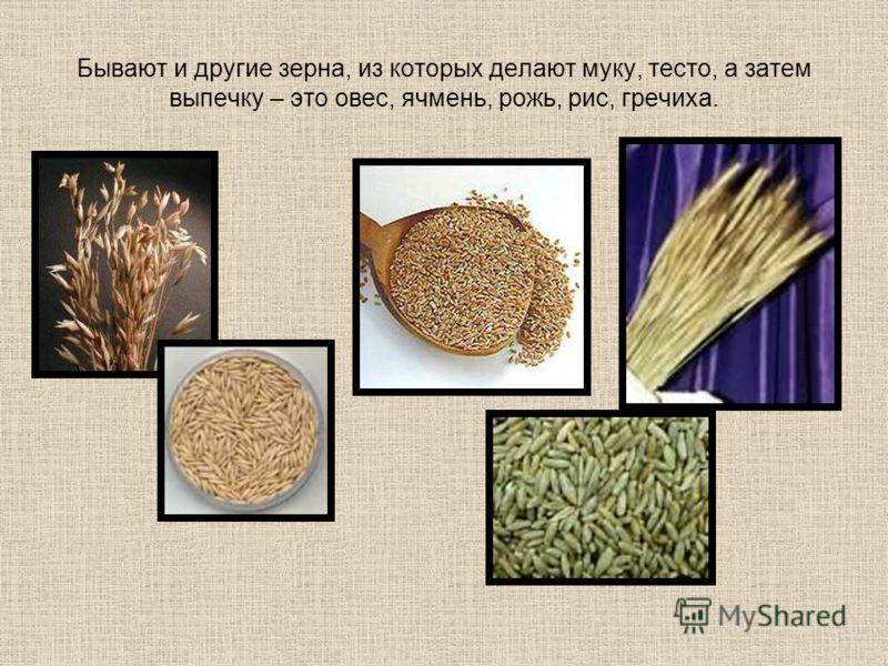 Бывают и другие зерна, из которых делают муку, тесто, а затем выпечку – это овес, ячмень, рожь, рис, гречиха.